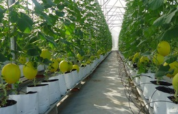 Gỡ khó cho phát triển nông nghiệp công nghệ cao