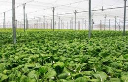 Việt Nam thuộc nhóm 10 quốc gia châu Á có diện tích nông nghiệp hữu cơ lớn
