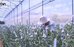 Đã giải ngân hơn 32.000 tỷ gói tín dụng ưu đãi nông nghiệp