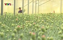 Lâm Đồng khơi thông dòng vốn cho nông nghiệp công nghệ cao
