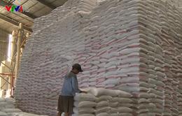 Việt Nam cần xác định lại động lực chính thúc đẩy ngành nông nghiệp