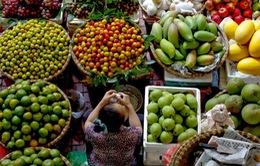 Hội nghị hợp tác phát triển thị trường nông sản của 15 tỉnh thành