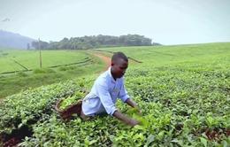 Nông nghiệp công nghệ cao - Điểm nhấn kinh tế Israel