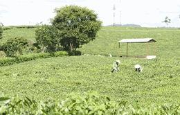 Tăng cường hợp tác công tư trong nông nghiệp