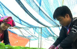 Việt Nam nỗ lực thực hiện mục tiêu quốc gia về bình đẳng giới
