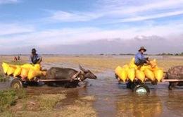 Nước lũ đầu nguồn vùng Đồng bằng sông Cửu Long lên nhanh