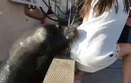 Hình ảnh kinh hoàng bé gái bị sư tử biển lôi xuống nước