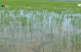 Thừa Thiên – Huế chủ động nguồn nước tưới mùa nắng hạn