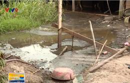Chính quyền vào cuộc giải quyết ô nhiễm từ chăn nuôi bò