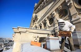 Nuôi ong trên mái nhà tại Paris, Pháp