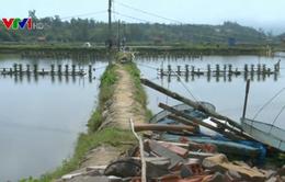 Tháo gỡ khó khăn vùng nuôi tôm bị bỏ hoang