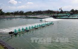 Xây dựng trạm bơm nước biển phục vụ nuôi tôm trên cát
