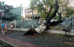 Bão số 12 đổ bộ, gây thiệt hại nặng cho tỉnh Khánh Hòa