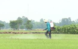 Ô nhiễm môi trường do hoạt động nông nghiệp ở ĐBSCL