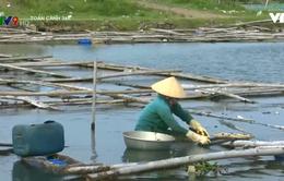 Tái diễn lấn chiếm đất mặt nước để nuôi ốc cháy trên đầm Ô Loan
