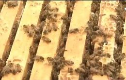 Nghiên cứu mới về tác dụng của thuốc trừ sâu tới loài ong