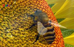 Phát hiện dư lượng thuốc trừ sâu trong mật ong
