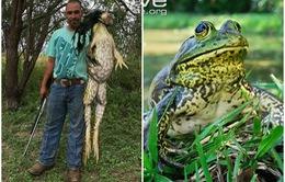 Sự thật đằng sau bức ảnh ếch khổng lồ nặng 5kg