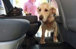 Thú nuôi ở Lebanon có dịch vụ taxi riêng