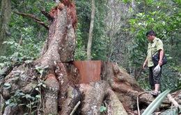 Đăk Nông liên tiếp xảy ra phá rừng