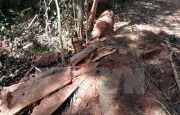 Đắk Nông: Khởi tố cán bộ hủy hoại rừng