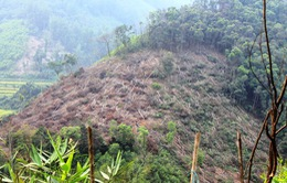 """Bình Định """"mất trắng"""" 43 ha rừng"""