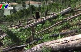 Thủ tướng yêu cầu xác minh vụ phá rừng phòng hộ ở Quảng Nam