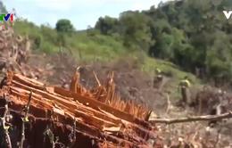 Phá rừng đặc dụng tại Điện Biên: Trách nhiệm của chủ rừng ở đâu?