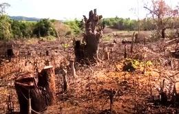 Không có vùng cấm trong xử lý các vụ phá rừng