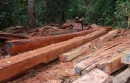 Đắk Lắk điều tra, xử lý nghiêm vụ phá rừng trái phép ở huyện Ea H'leo