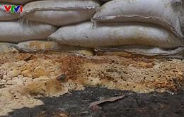 Tây Nguyên: Người dân tự tay phá vườn cà phê do phân bón giả