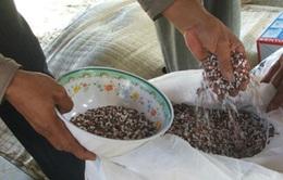 Địa phương sẽ chịu trách nhiệm về tình trạng phân bón kém chất lượng