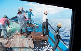 Hà Tĩnh: Hơn 1.000 tấn thủy sản cập cảng trong quý I