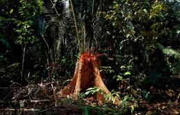 Báo động tình trạng rừng Amazon bị tàn phá