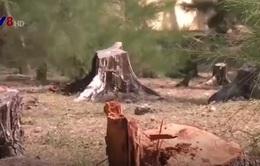 Yêu cầu kiểm tra việc phá rừng tại Phú Yên sau phản ánh của VTV