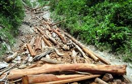 Khó ngăn chặn nạn phá rừng trái phép tại Bắc Cạn