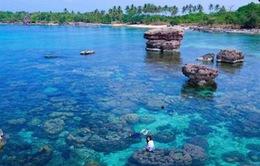 Đến đảo Hòn Yến mùa nước cạn ngắm san hô nổi trên mặt nước