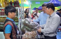 """Phiên chợ Sâm Ngọc Linh """"độc nhất vô nhị"""" tại Quảng Nam"""