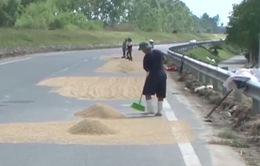 Mất an toàn giao thông do... phơi lúa trên đường