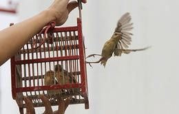 """""""Nghi thức phóng sinh chính là bảo vệ sự sống của các loài vật"""""""