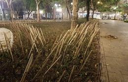 Tháo dỡ hàng rào chông tre ở vườn hoa Nhà hát lớn Hà Nội