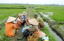 Giản dị bữa cơm ngoài đồng của người nông dân