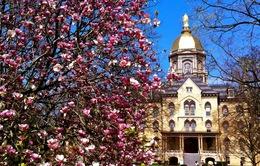 """""""Lác mắt"""" với 15 khuôn viên trường đại học đẹp nhất thế giới"""