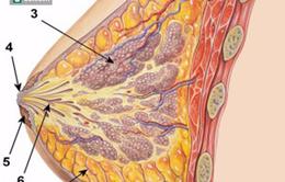 Khi có những dấu hiệu này, 80% bạn đã mắc ung thư vú