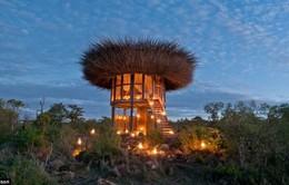 Trải nghiệm khách sạn tổ chim 5 sao đầu tiên trên thế giới