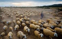 Một tuần thành công rực rỡ của nhiếp ảnh Việt trên National Geographic