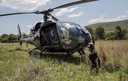 Độc đáo những chú chó anh hùng nhảy dù cứu voi