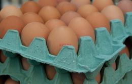 Italy thu giữ 92.000 quả trứng nhiễm Fipronil