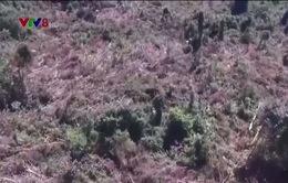 Phú Yên: Kiểm điểm tập thể, cá nhân liên quan đến chuyển mục đích sử dụng rừng