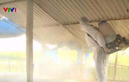 Xuất hiện thêm ổ dịch cúm gia cầm H5N1 tại Cao Bằng